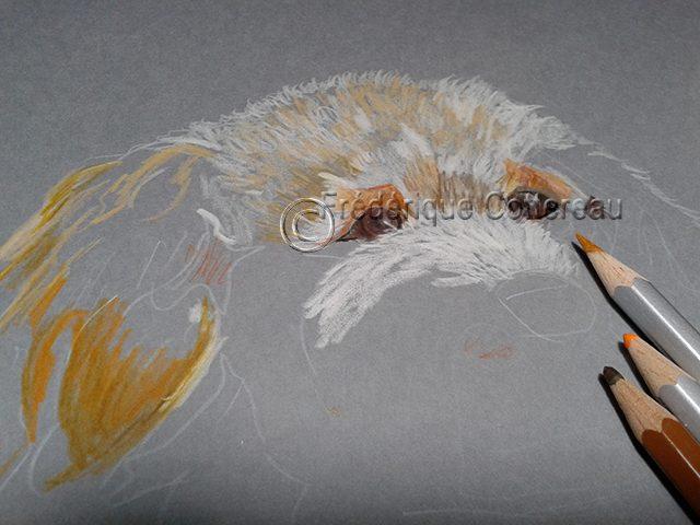 Le dessin de Ugo, le caniche